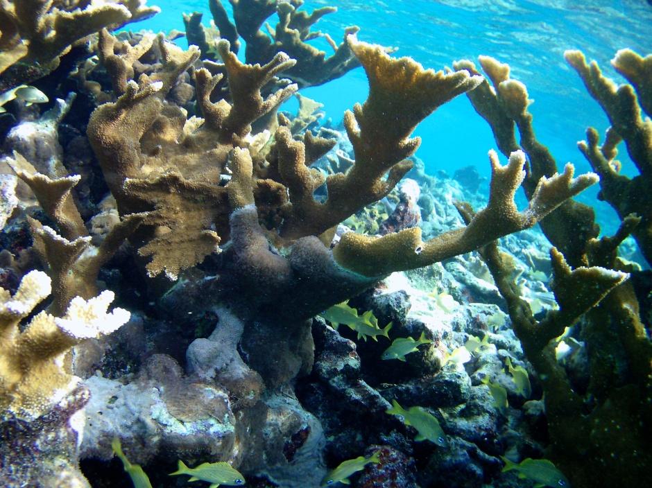 Zemūdens pasaule (ar snorkelētāja un vecas action kameras acīm)