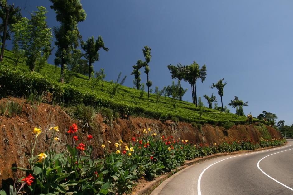 Vienkārši ceļš gar tējas plantācijām